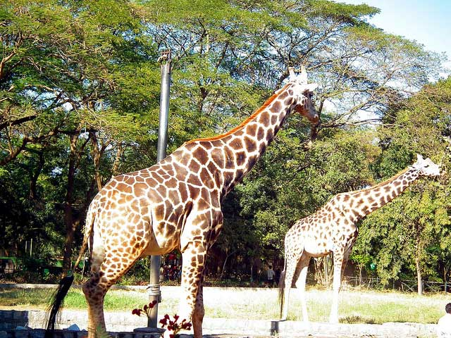 Mysore Zoo, Mysore